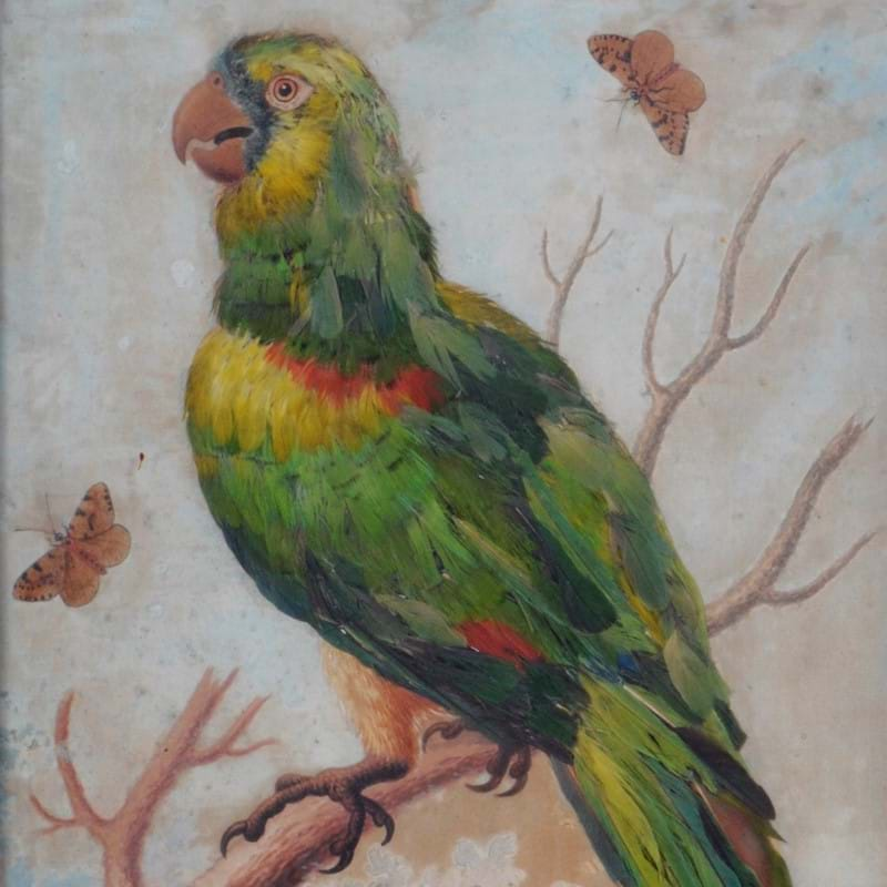 George Edwards (1694-1773), A parrot in a landscape, signed and dated 1742 | The Collection of the late Ian Askew