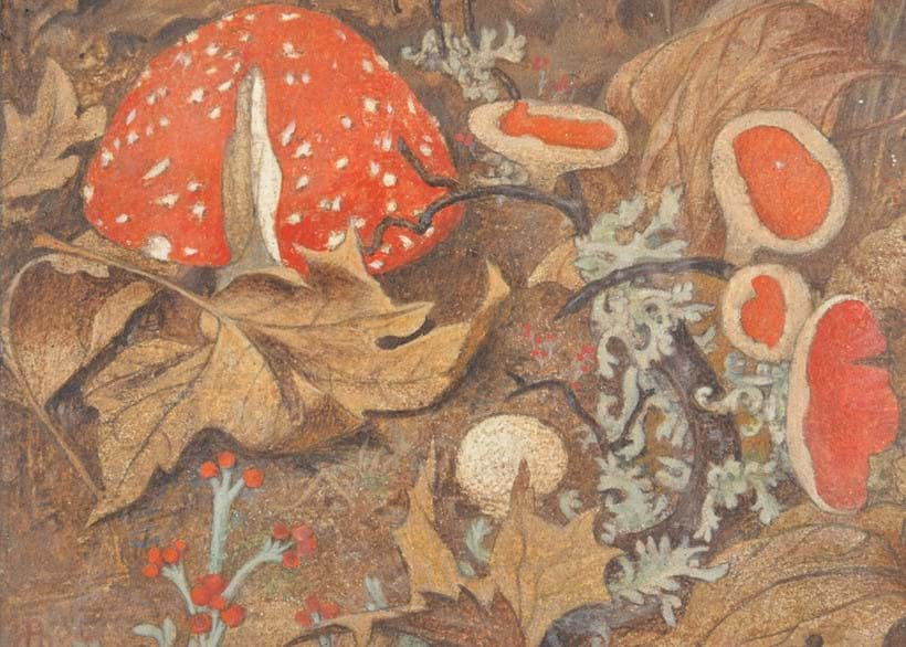 Inline Image - Lot 187, Maxwell Ashby Armfield (British 1882-1972), Funghi No. 1;. to be offered with Funghi No. 2, egg tempura on copper;  est. £4,000-6,000 (+fees)