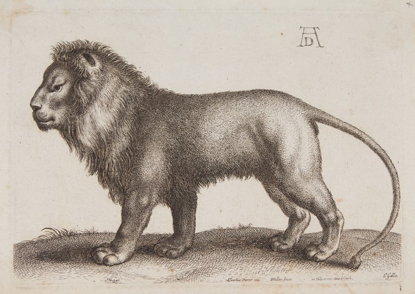 Inline Image - A lion standing, after Albrecht Dürer | etching, C. Galle, circa 1650 | est. £150-200, sold for £310